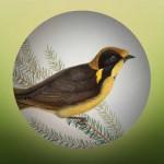 OV Field guide to Victorian Fauna
