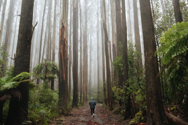 person walking through a forrest