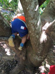 Little kid climbing a tree